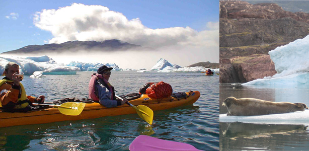 kayak in greenland. Tasiusaq seal on ice