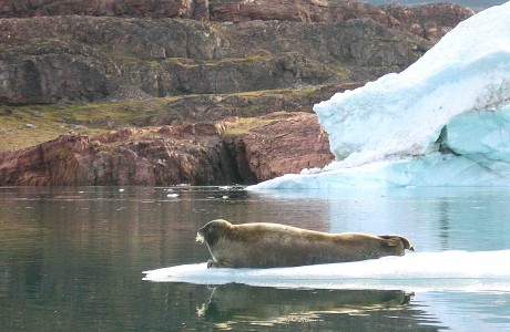 Foca en islita de hielo